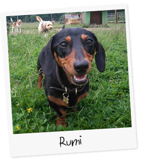 Rumi the Dog