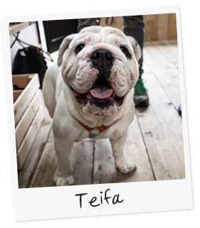 Teifa the Dog