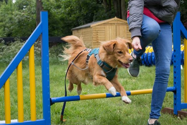 Dog Agility in London