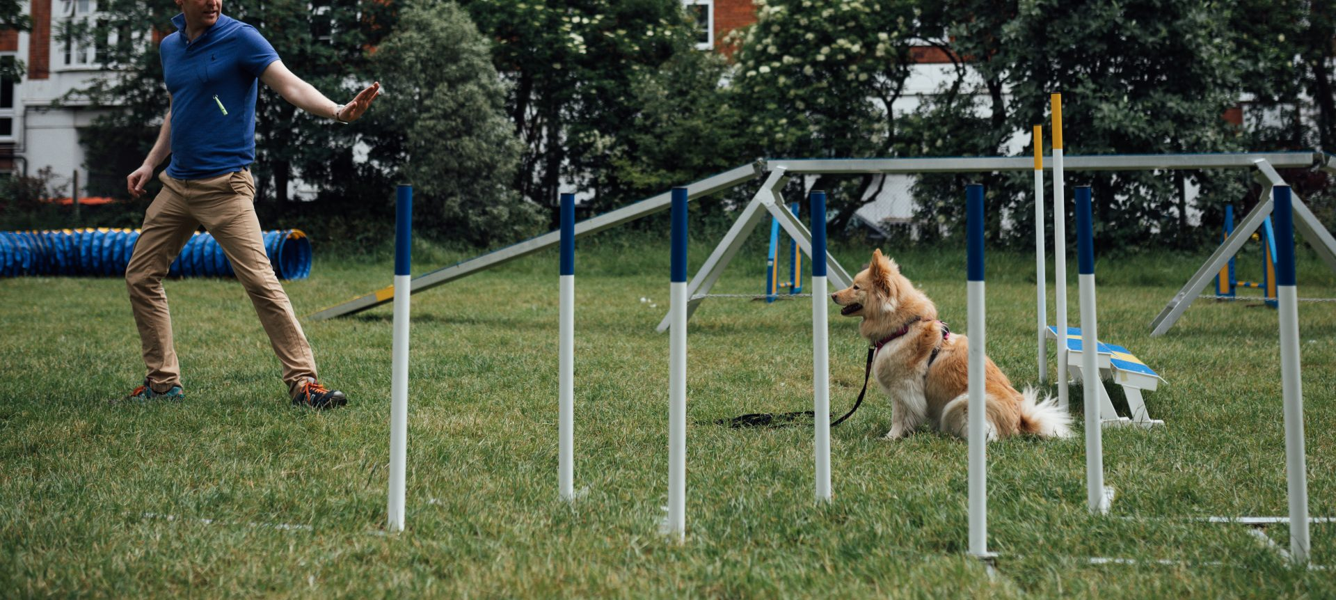 Best Puppy Training Classes Near Me In Northern Ireland UK