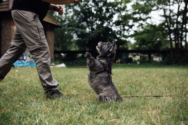Dog Behaviour Training